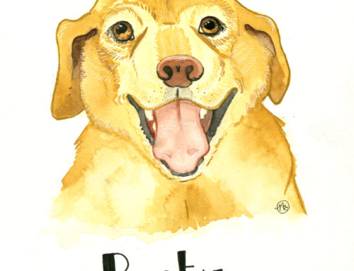 Rusty – Pet Portraits