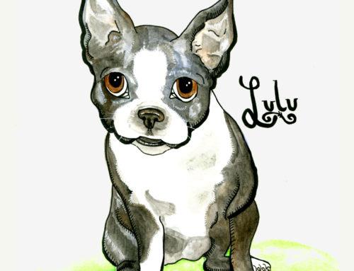 Lulu -Boston Terrier